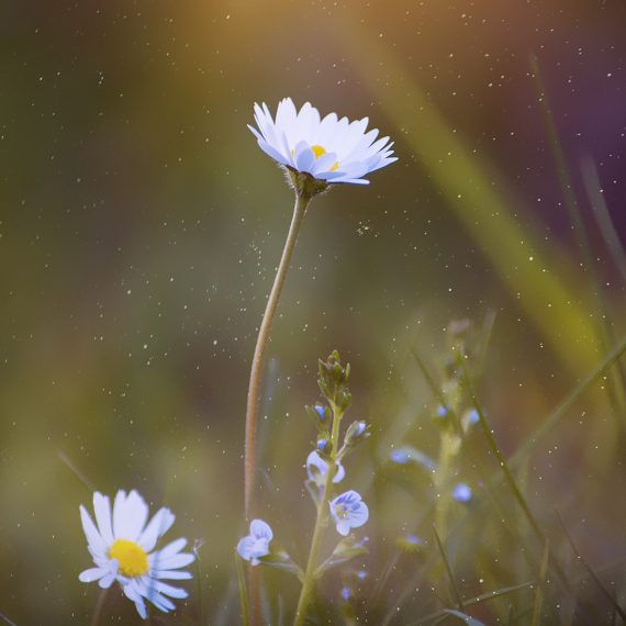 A flower reaching up towards the sun